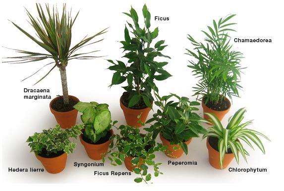 Quels effets des plantes sur la pollution de l 39 air int rieur home testing le blog - Plante contre l humidite dans la maison ...